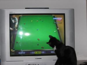 Snooker ganz nah